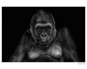 Animal Photography PRINT, Gorilla-2, Wall Art