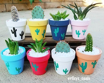 Adorable Hand painted( your color of choice) small terra cotta pot comes with cactus or succulent ( party favors/ showers / gift/ birthday)