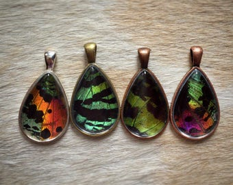 Custom Real Butterfly Jewelry // Teardrop Sunset Moth Necklace // Real Insect Jewelry // Rainbow Jewelry // Unique Gifts