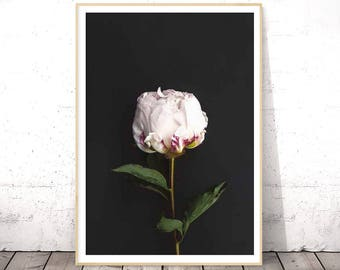 Flower Print, Botanical Art, Peony Art, Flower Photography, Flower Poster, Botanical Photo, Flower Wall Art, Floral Print, Digital Download