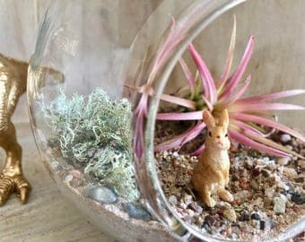 Fairy Garden Diy Air Plant Terrarium