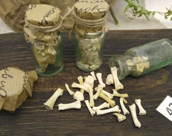 Witch bottle spells witchcraft supply wicca altar decor pagan occult   protection amulet   real bones   SET of 3 bottles