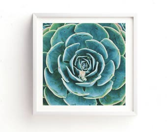 succulent print, desert wall art, echeveria succulent photograph, botanical wall art, for her, photography gift modern home decor, printable