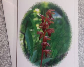 Striped Coralroot Orchid Montana Blank Notecard 4 x 5