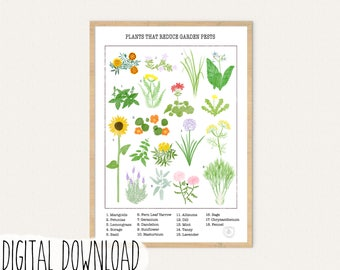 Plants that Reduce Garden Pests, Infographic, Poster, Digital, Art Print, Educational