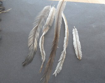 feathers rare EMU, 2, natural authentic.
