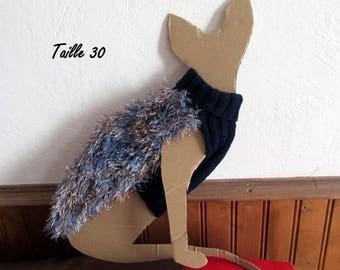 blue sweater for little Sphynx cat