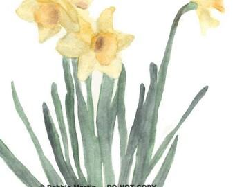 Unnamed Daffodils
