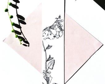 Marked botanical page, drawing red Sage, nature illustration, black and white illustration, hand card original Botanical drawing ink