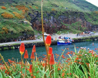 Red Hot Poker Flowers and Fishing Boat Photo, Boscastle, harbour, fishing boat, photo print, seaside, Picturesque print, Cornwall,