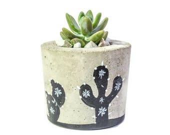 Painted Concrete Planter, Concrete Planter, Succulent Plant Pot, Succulent Planter, Cement Planter, Includes Succulent, Gift Idea,