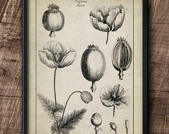 Flower · Instant Download · Botanical · Vintage · Art ·  Wall · Printable · Digital File #33