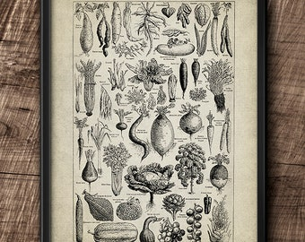 Legumes · French Dictionary · 1920s· Vintage · Vegetables · Instant Download · Printable  #180