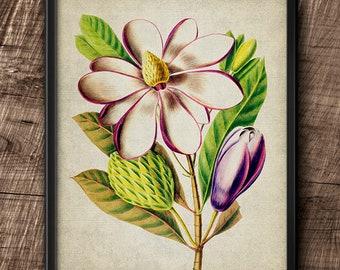 Magnolia · Flower · Vintage · Instant Download · Printable #188