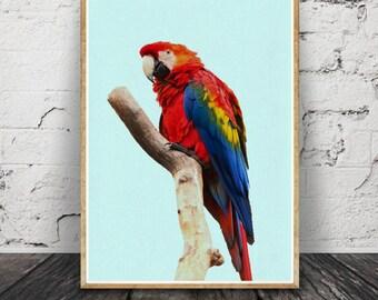 Oiseau perroquet Print, Tropical Wall Art, Toucan oiseau, décor Tropical, Printable Art, rose jaune noir, photographie d'oiseaux