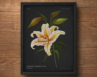 Lily print, Botanical wall art, Flower print, White flower print, Vintage botanical print, Antique botanical, Large wall art, White lily