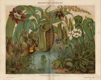 Antique lithograph of insect eating plants, pitcher plant, butterwort, Venus flytrap, cobra lily, sundew, waterwheel plant from 1893