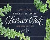 Succulent ClipArt - Burro's Tail Succulent Specimens - Realistic Succulent Images - Digital Succulent PNG files - Digital Botanic Clip Art