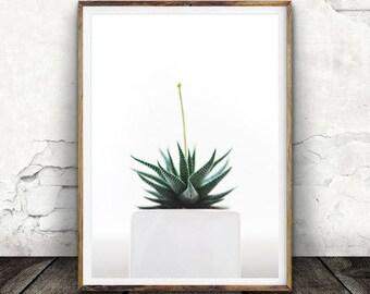 Succulent Print, Cactus Print, Botanical Print, Digital Wall Art, Decor, Plant Print, Nature Art,Photography, Poster, Digital Download,