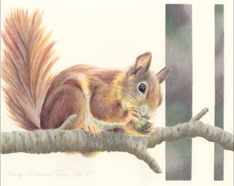 Squirrel Wildlife High Quality Print Drawing Coloured Pencil