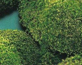 Mood Moss | Decorative Moss | Dried Moss | Natural Decor