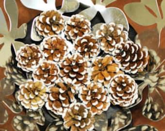 White Tipped Austriaca Pine Cones   White Tipped Pine Cones   Pine Cones   Winter Decor   Natural Decorations