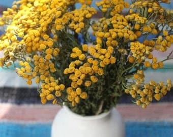 Dried Tansy, Yellow Dried Flowers, Wedding Decor, Yellow Tansy, Tanacetum Vulgare, Dried Flowers, Home Decor, Medicinal Plant, Floristry
