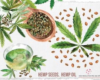 Watercolor Hemp seeds, oil, Superfood hemp set: hemp leaves, oil, seeds, Organic healthy food, Watercolor Drawing, Clipart, Clip Art, PNG
