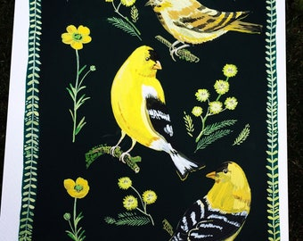 Goldfinch and mimosa