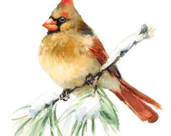 Bird Cardinal Watercolour Painting Q91
