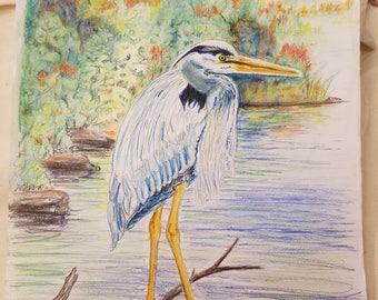 Blue Heron Drawing