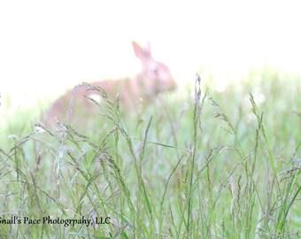 Digital Download: Mystical Grassland