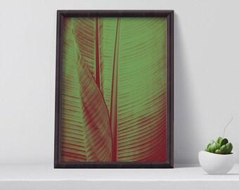 Plant Wall Art, Modern Art Print, Botanical Photography, Plant Poster, bedroom decor, Large Modern Print, Gift for her, Digital Download