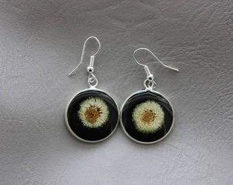 Earrings round 2cm in resin and dried daisies Pom Pom flowers