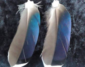 Pretty dangling with Duck feather