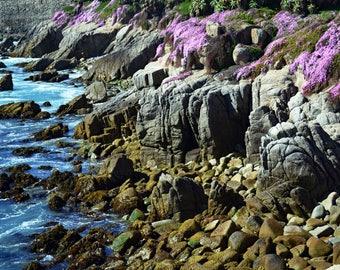 California coast, rocks at the water edge, wild flowers on the coast, surf on the rocks, rocky coast line.