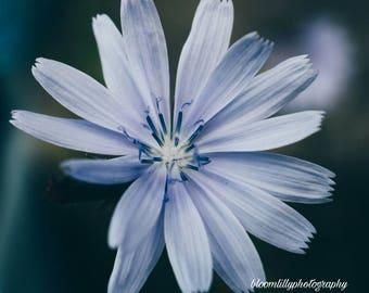 Violet flower print