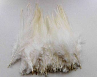set of 10 feathers off-white 10-15cm