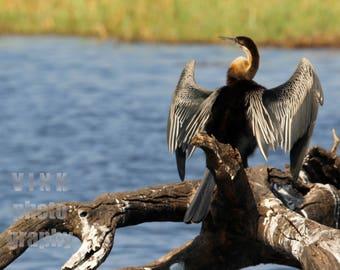 Sunbathing bird in Africa