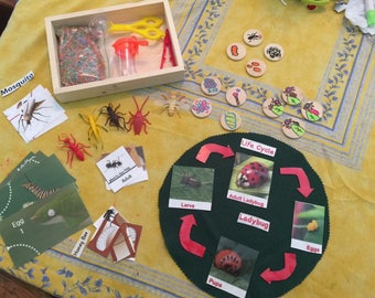 Insect life cycle set