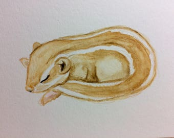 Sleeping Baby Squirrel Original Watercolor Painting