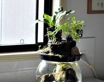 Bowl Water Feature- Aquaponics (fish and plants)