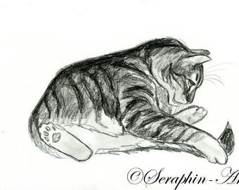 Playful Tabby Kitten Original Pencil Drawing