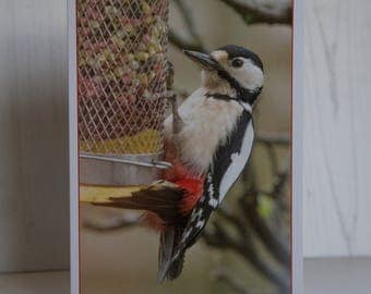 Wildlife Greeting Card - Greater Spotted Woodpecker.