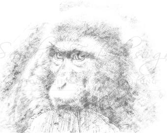 Digital download for your own prints-motif monkey in sketch style