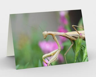 Orchid Mantis - Praying Mantis - Set of 3 Blank Cards - Thank You Cards - Greeting Cards - Nature Cards - Insect Cards