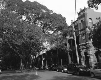 "The ""tree street"""