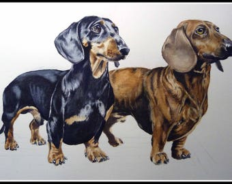 custom watercolor Dachshund in size 30/40
