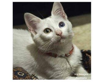 White Kitten CARD