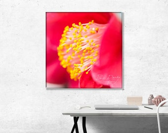 Camellia Japonica Dr King Red Flower. Photo Wall Art Print